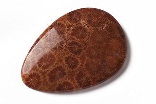 Fosílny Koral - kameň leštený